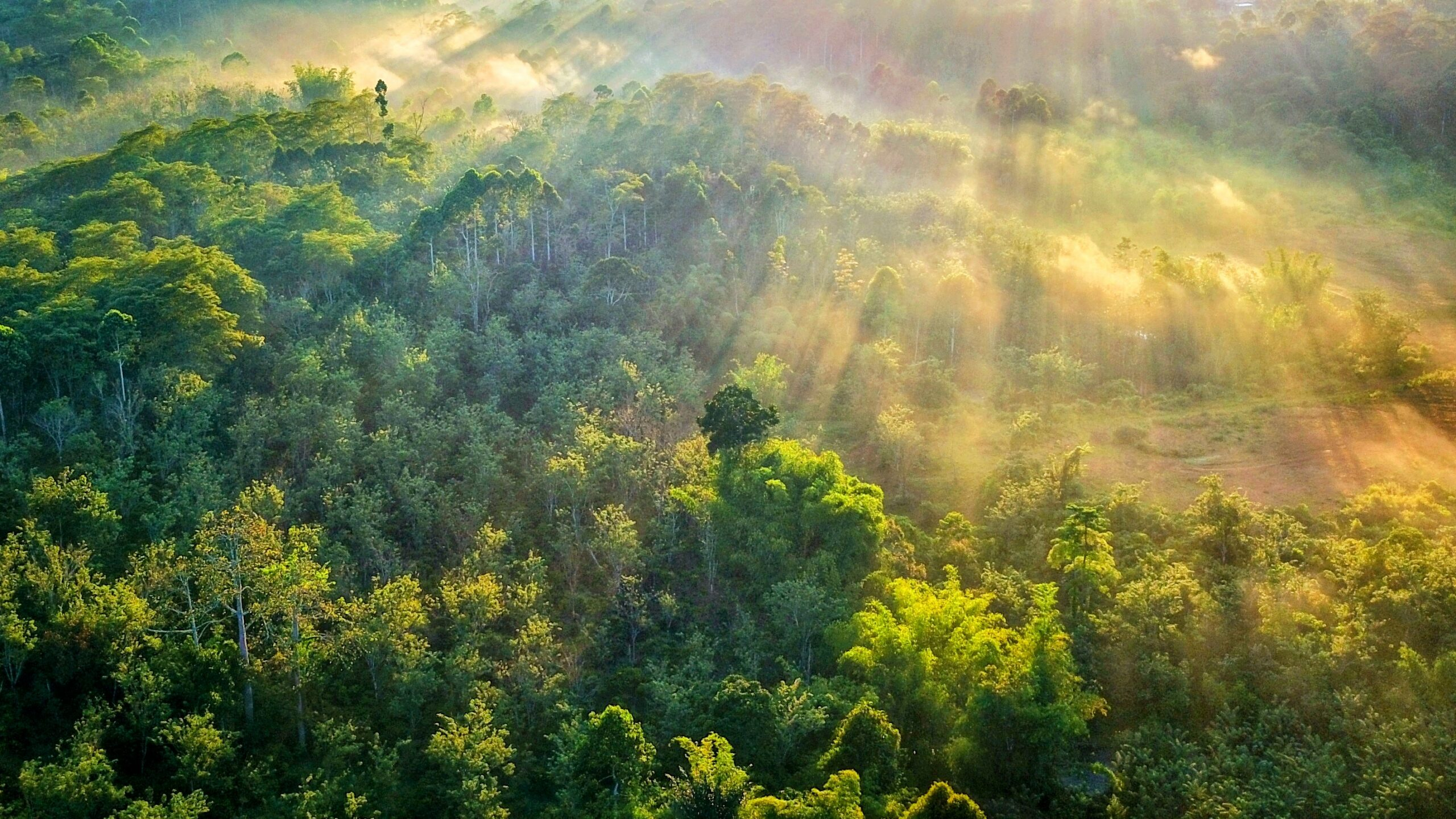 Terrestrial plants changed how Earth regulates its climate • Earth.com - Earth.com