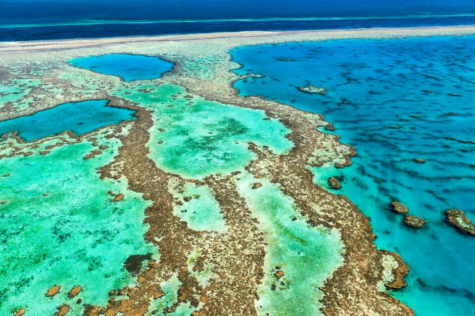 An international team of coral scientists is calling on policy makers around the world to take action for the protection of coral reefs
