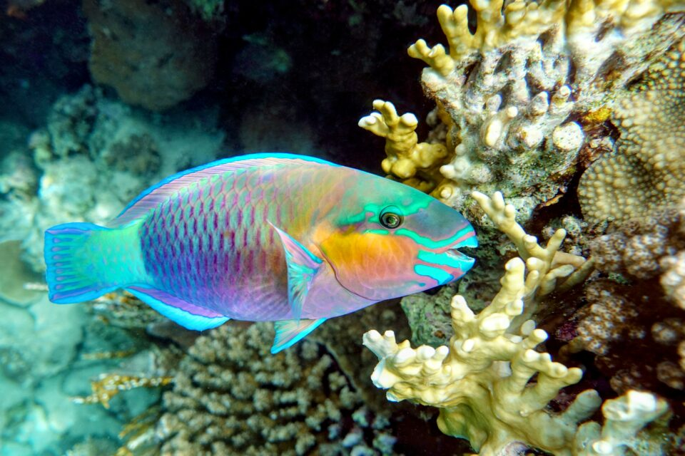 A new study reveals that reef fish and other types of social fish depend on friendships for their very survival.