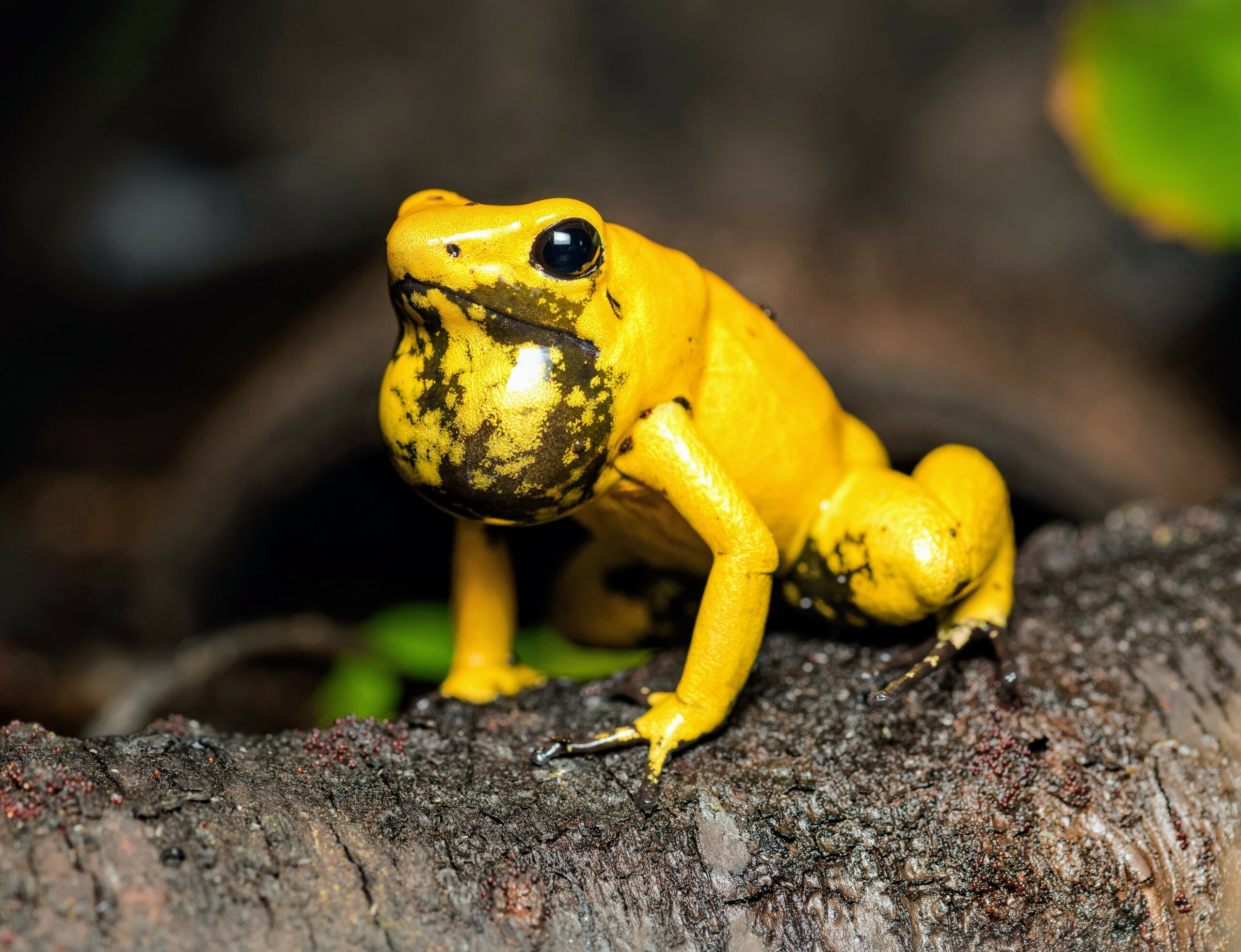 Poisonous animals are fascinating