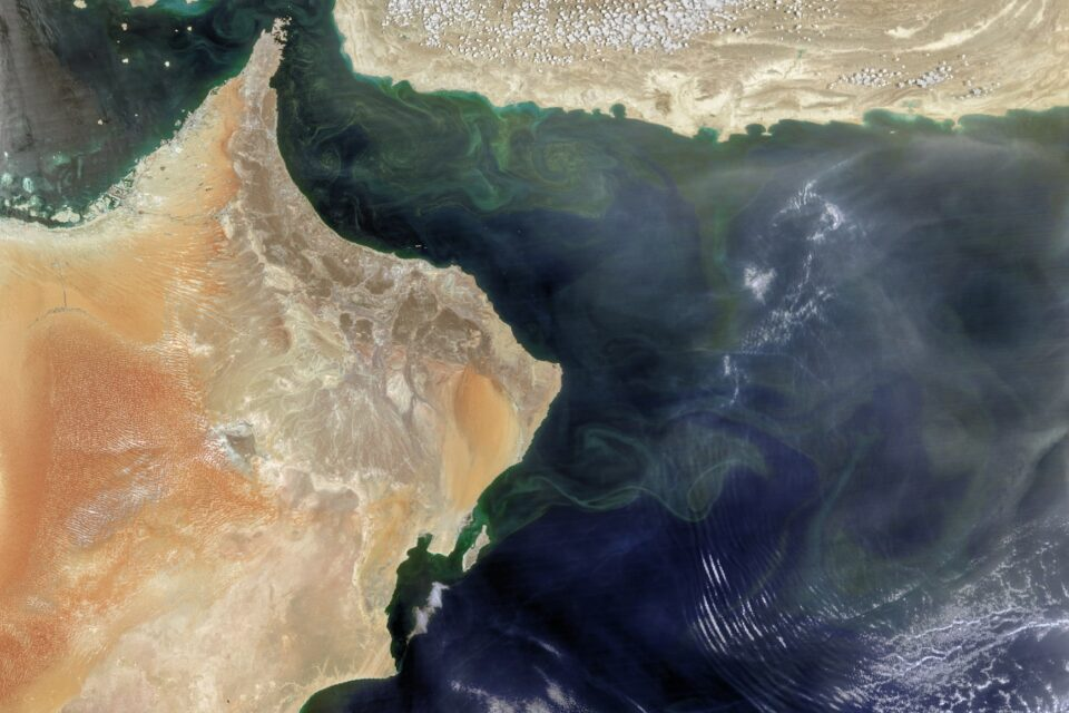 Today's Image of the Day from NASA Earth Observatory shows a bloom of Noctiluca scintillans in the Arabian Sea at an unusual time of the year.