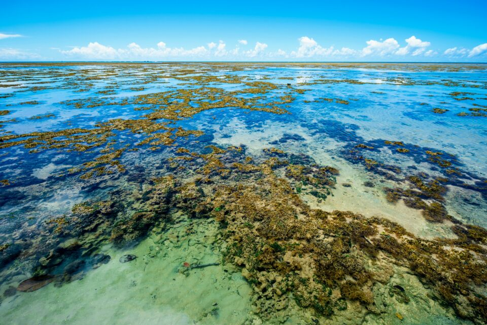 Global warming has increased temperatures in some of the world's oceans, which is threatening the survival of corals
