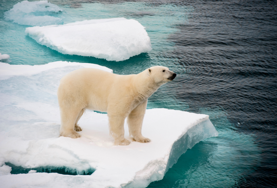 Scientists have developed a new artificial intelligence tool called IceNet, which can accurately assess the status of Arctic sea ice even months into the future