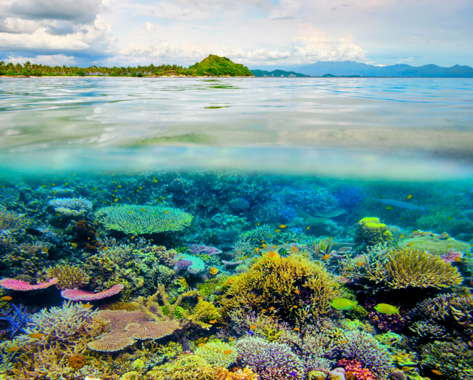 new research shows that some coral communities are evolving to become more heat tolerant as ocean temperatures rise