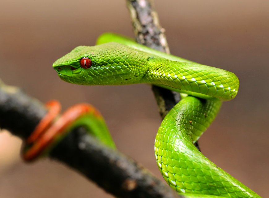 all 4,000 species of snakes populating the Earth today evolved from a just a few species which survived the devastating asteroid impact