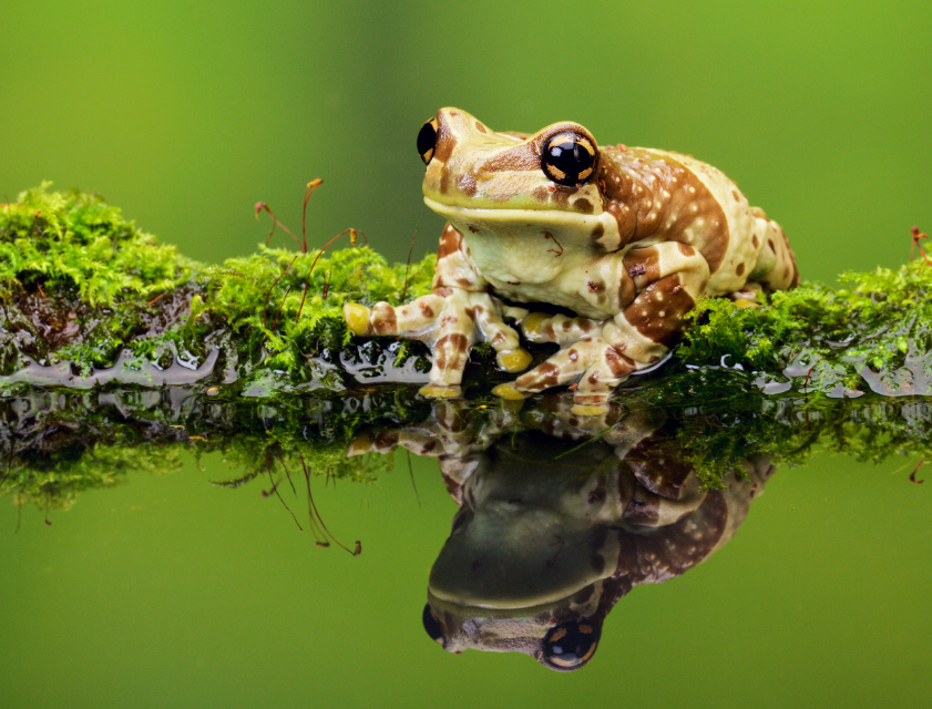climate change might have a significant role in diminishing the capacity of wood frogs to withstand road salt pollution