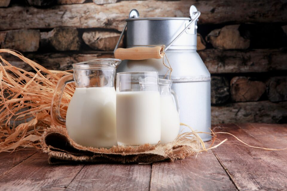 A new study published in the journal Nature has found that milk consumption might have played a fundamental role in the ability of the Bronze Age Yamnaya population to travel extensively