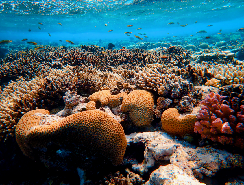 An estimated six million people worldwide make use of coral reefs for the purpose of fishing