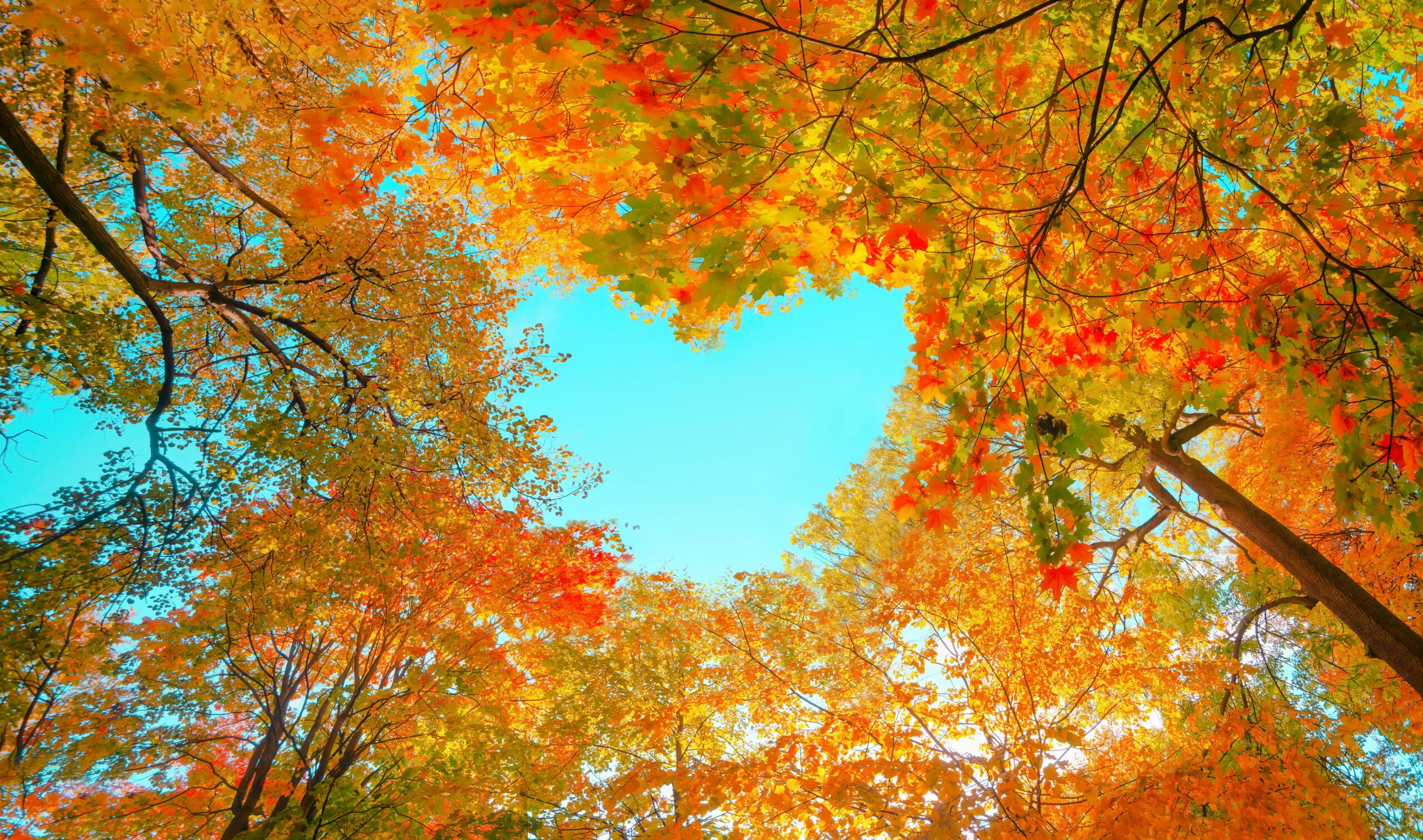 Today is the autumn equinox, which marks the astronomical start of fall in the Northern Hemisphere, and the beginning of spring in the Southern Hemisphere.