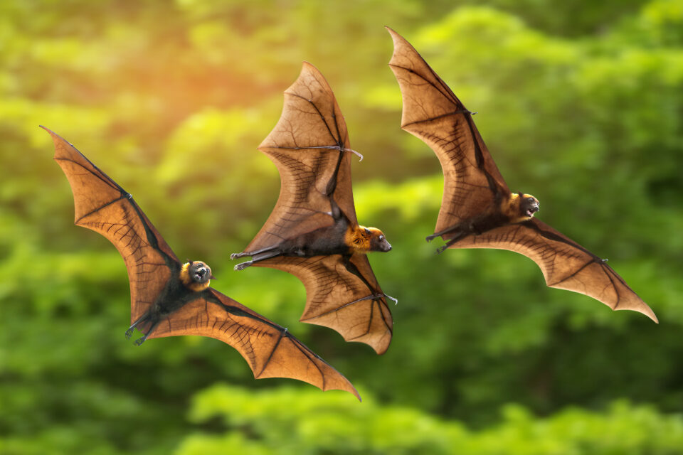Vampire bats are known to form long-term relationships by grooming each other and even sharing regurgitated blood meals while roosting in trees