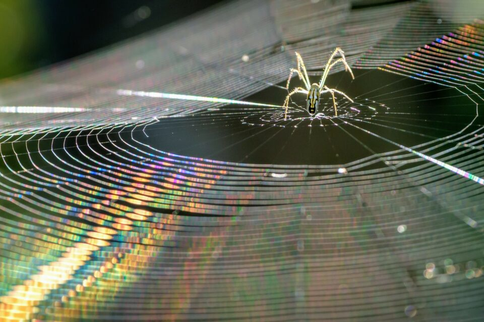 The virtues of spiders' silk have been extolled since ancient times when the Greeks and Romans apparently used bandages of spider web to help staunch bleeding