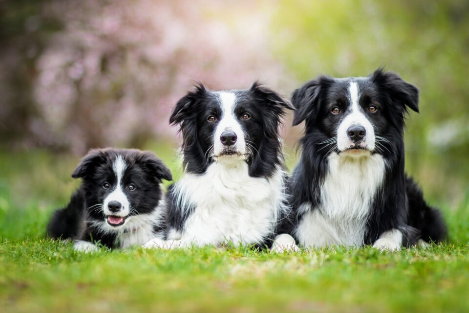 While it has long been known that dogs can easily learn action words, scientists have just recently found that some gifted dogs can also learn the names of objects.