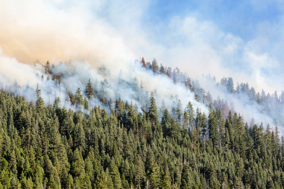 The effects of climate change are resulting in increasingly frequent wildfires in the Western U.S that are detrimental to the environment