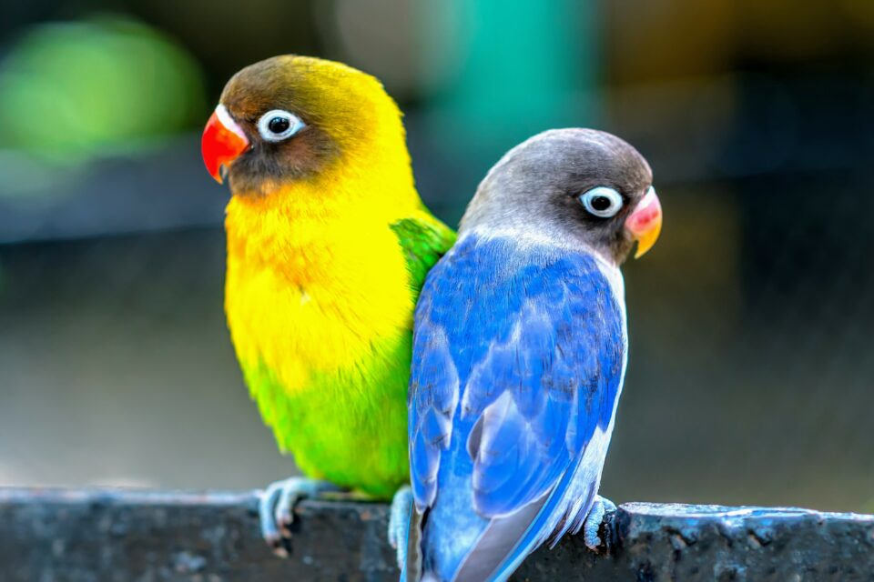 Roughly half of the world's 100 million parrots currently lives in zoos, breeding facilities, and homes