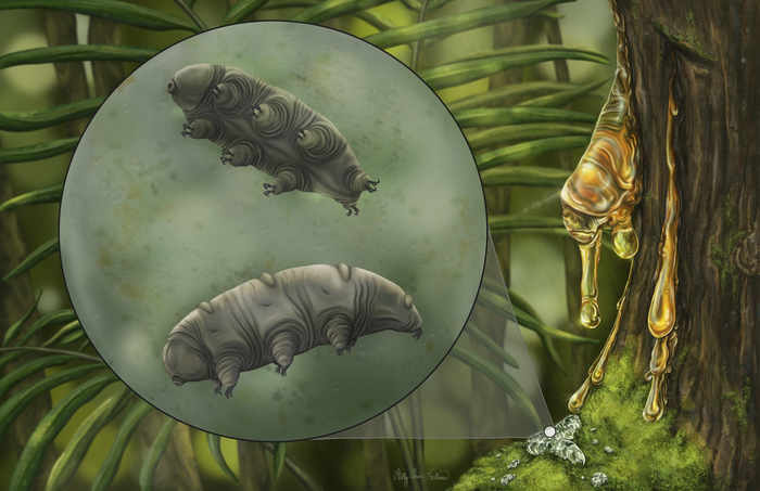 Tardigrades, also known as water bears or moss piglets, are a phylum of eight-legged segmented micro-animals that are approximately 0.02 inches in length