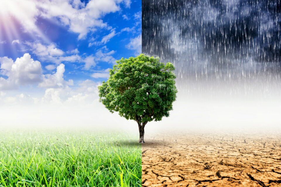 80 percent of the world's land area, where 85 percent of the population reside, has already been affected by climate change