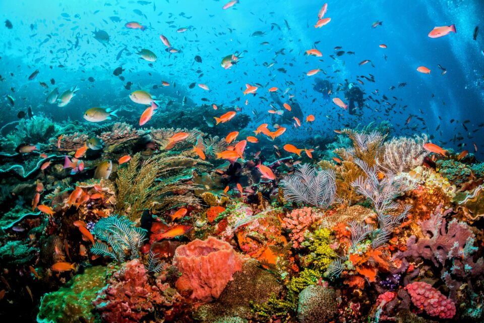 The Global Reef Expedition Final Report provides valuable baseline data on the status of coral reefs at a vital point in time that can aid the conservation efforts both locally and globally.