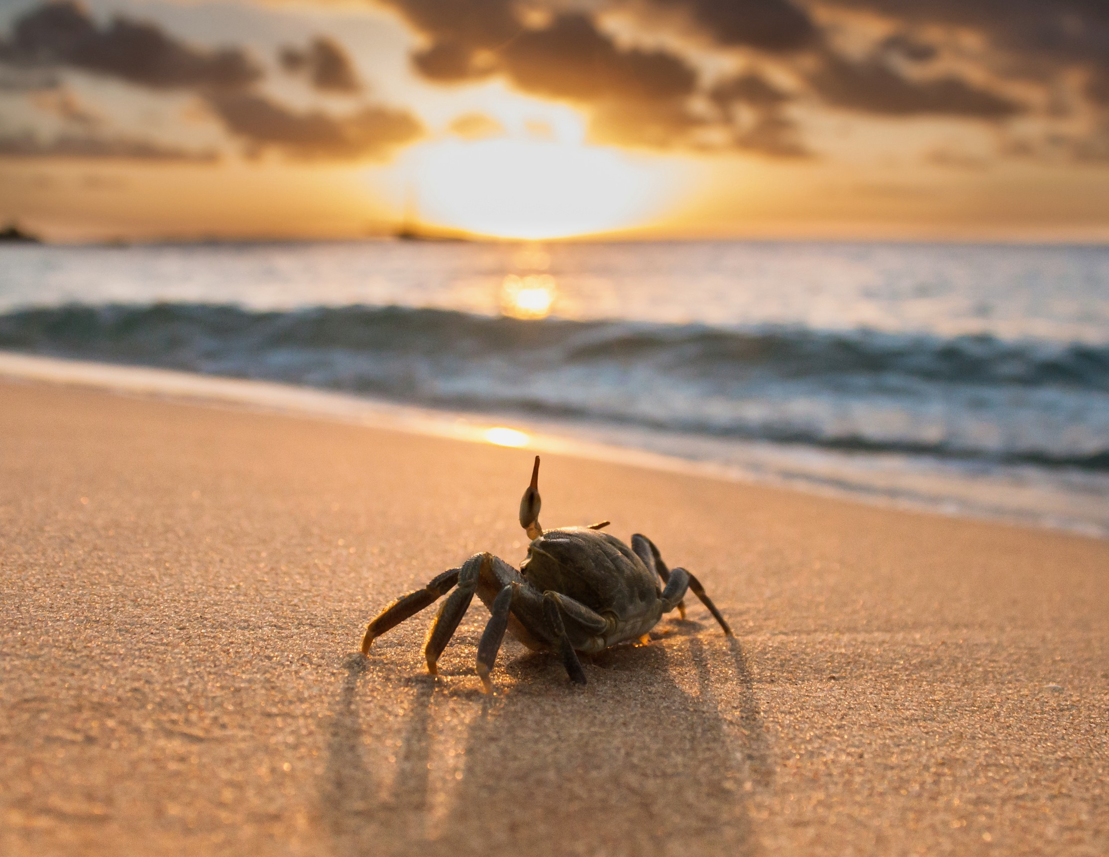 Tiny crab found in 100-million-year-old amber - Earth.com